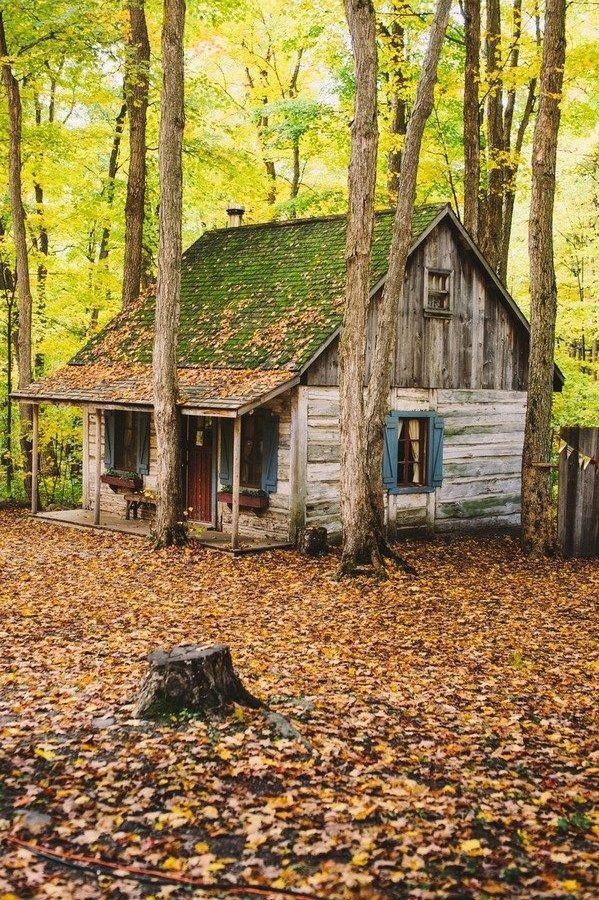Vieille cabane dans les bois | La maison du Petit Chaperon rouge et de sa grand-mère telle que je me la représentais | Le Petit Chaperon rouge