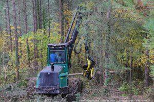Exploitation forestière - Castex