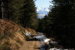 Forêt de Soulan - Biert