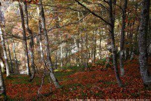 Bois de Besset - Vallée d'Orle (1250m)