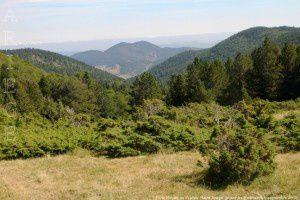 Forêt Royale de Prades