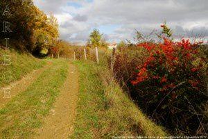 Chemin de Castex