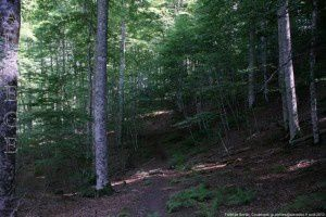 Forêt de Bonac