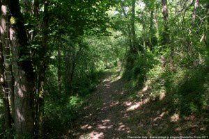 Chemin de Jany