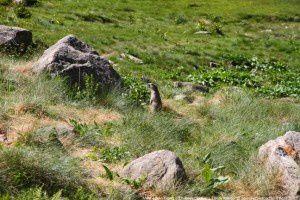 Marmotte - Etang d'En-Beys (1950m)
