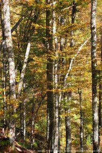 Forêt - Jacques (670m)