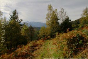 Forêt de Soula - Biert (1150m)
