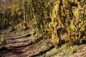 Lichens (500m)