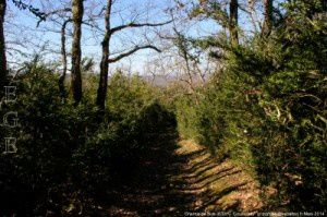 Chemin de buis (630m)