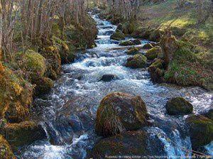 Ruisseau de l'étang d'Artax