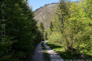 Forêt de Prades (1400m)