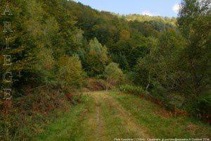 Piste forestière (1250m)