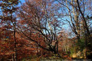 Forêt d'Ax-les-Thermes (vers 1200m)