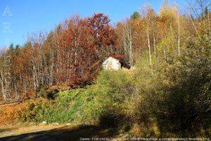 Cabane - Forêt d'Ax-les-Thermes (vers 1200m)