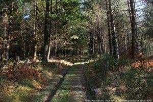 Forêt d'Alzen (970m)