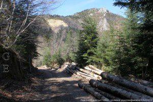 Piste forestière du Lut (1350m)
