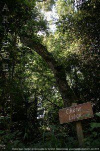 Chêne liège - Sentier de découverte du Terrefort