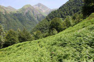 Descente à la Peyre (1015m)