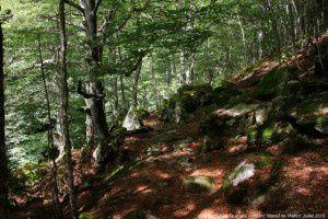 Sentier de Quioules (1350m)
