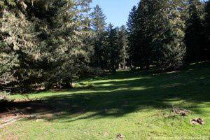 Forêt des Hares