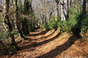Chemin de Carlong