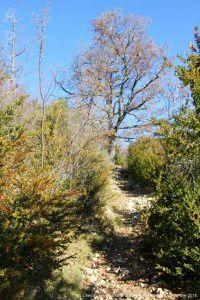 Chemin des dolomies - Caraybat