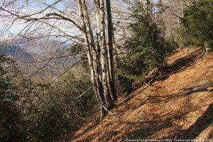 Chemin du col de Faboscur (1166m)