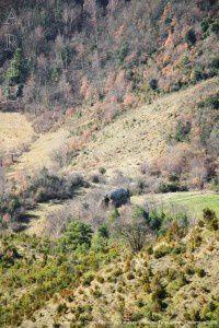 Vue sur Lujat - Chemin du col de Faboscur (1166m)