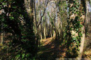 Chemin du Mas Vieux