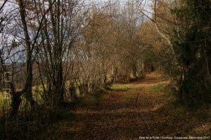 Bois de la Forêt