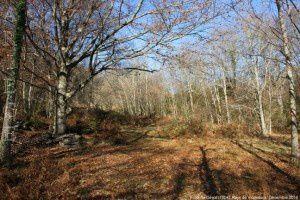 Forêt de Génat (1004m)