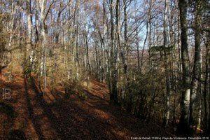Forêt de Génat (1160m)