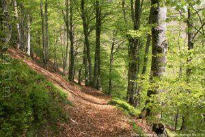 Sentier du plateau de Guirel (1050m)