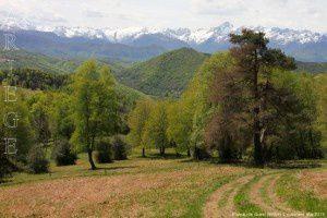 Plateau de Guirel (990m)
