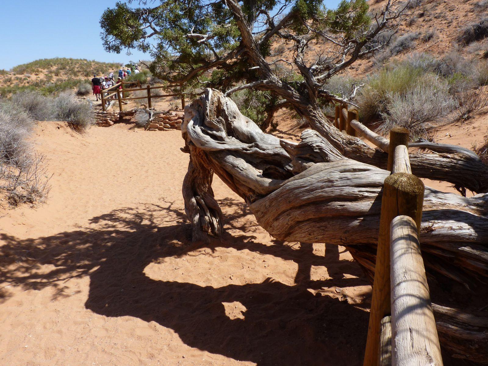 6 photos représentant la moitié du Trail