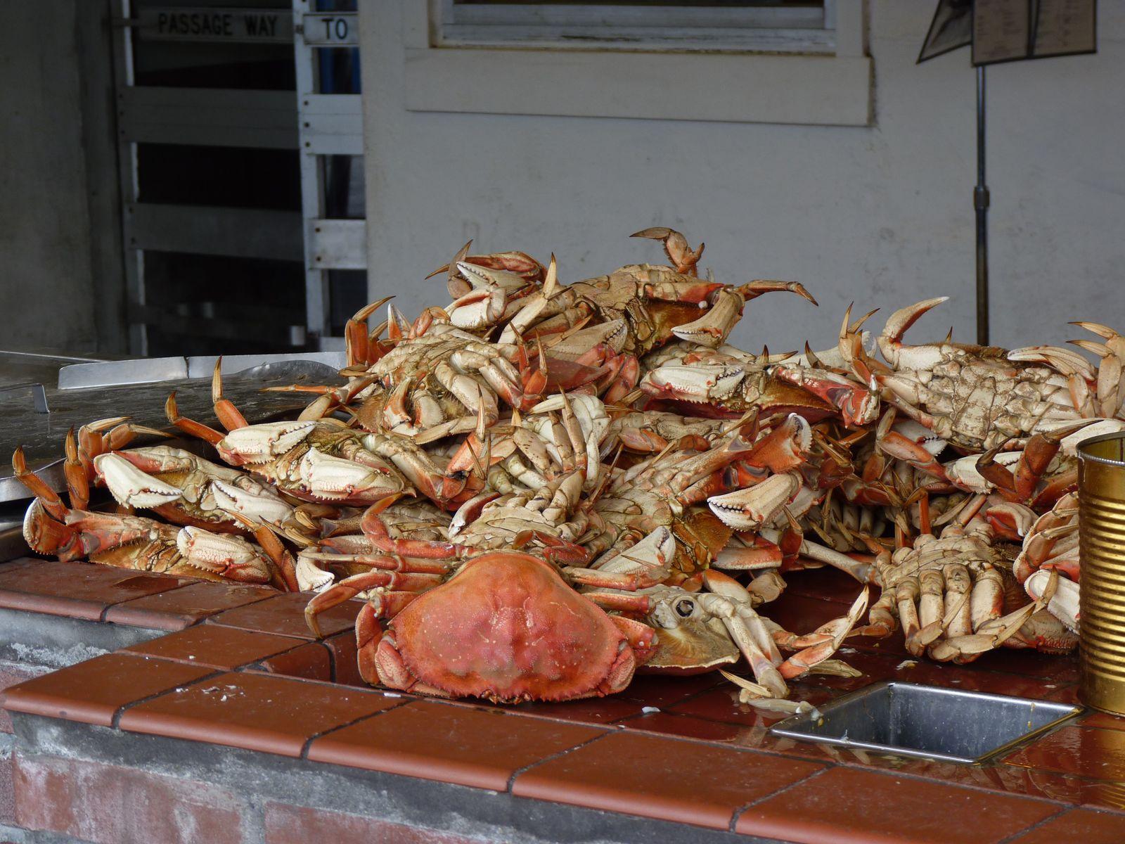 Des crabes et encore des crabes !
