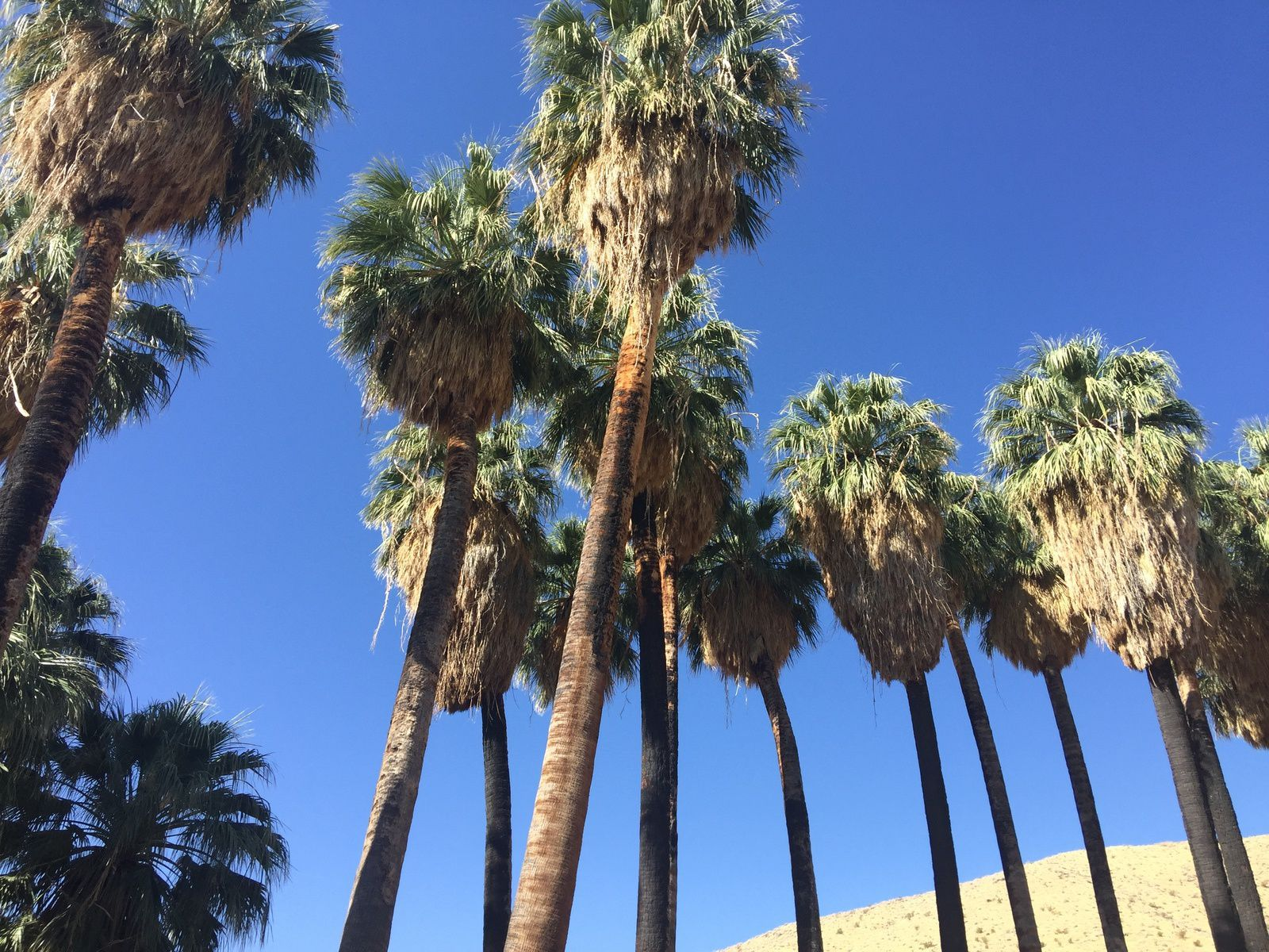 Immersion dans nos circuits : #1 PALM SPRINGS