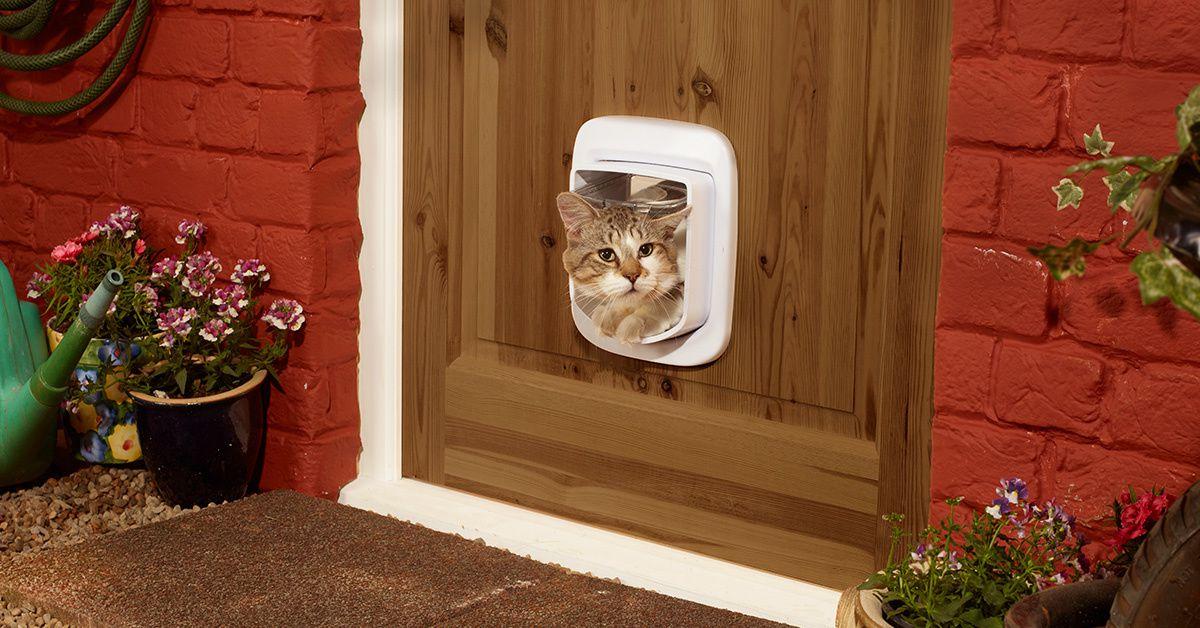 la chati re avec puce lectronique petsafe unebelleviedechat. Black Bedroom Furniture Sets. Home Design Ideas