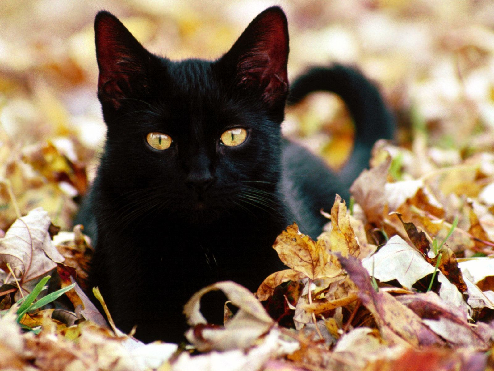 belle jeune chatte noire Sexy Teen Videos HD