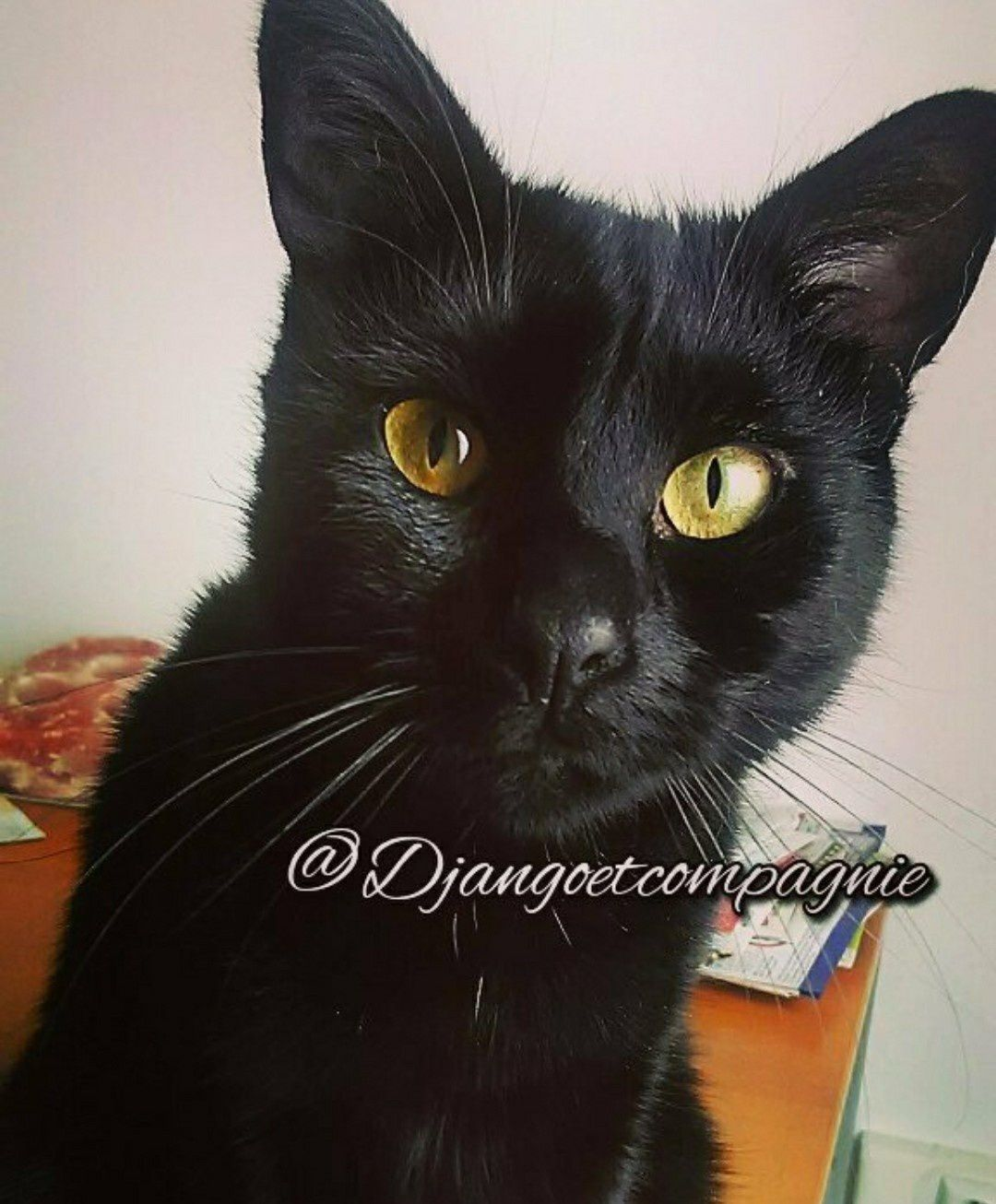 Ma chatte humide noire