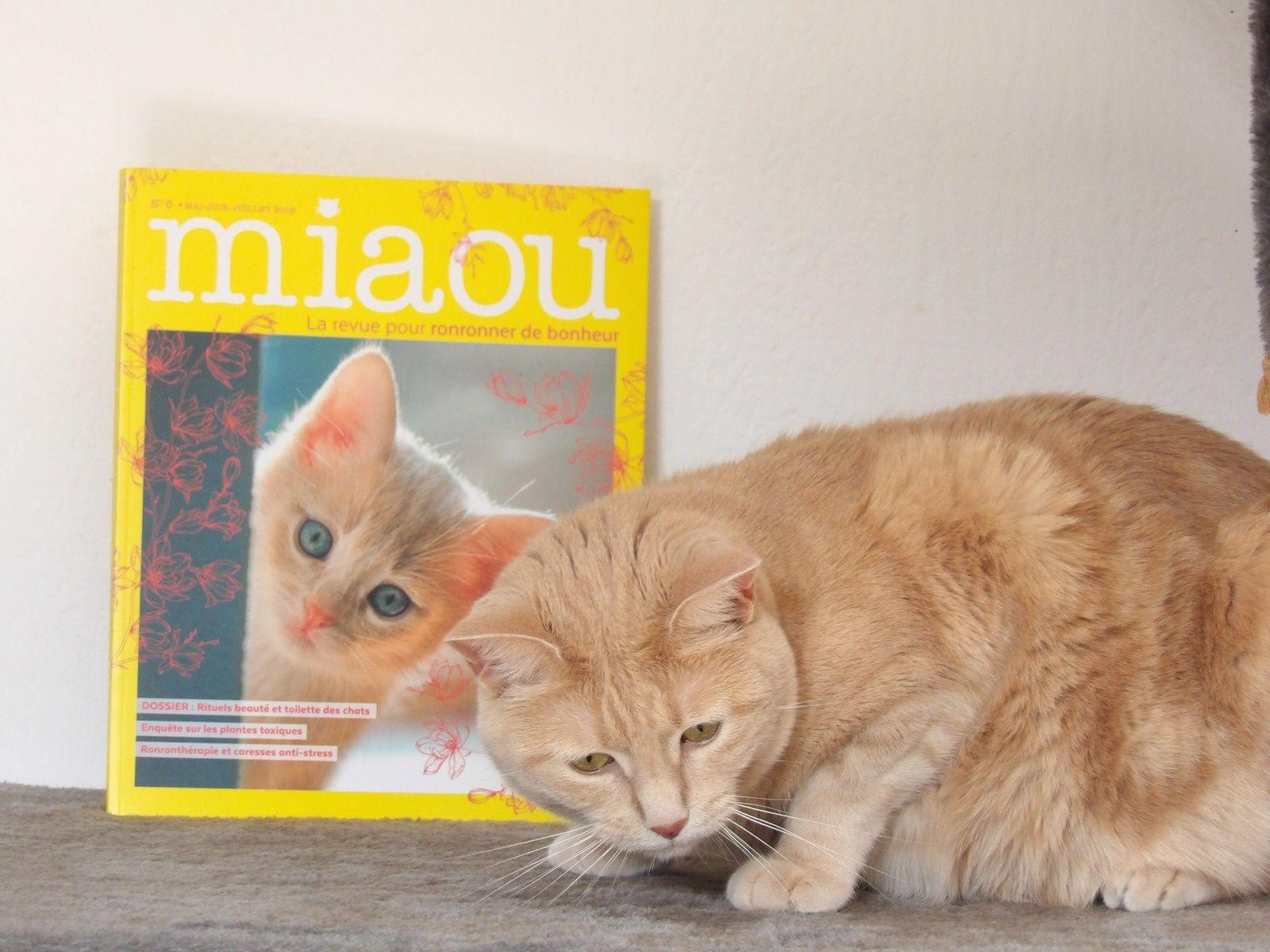 miaou la revue
