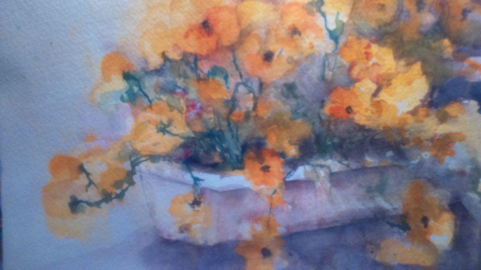 les pensées, bac à fleurs en mon jardin !