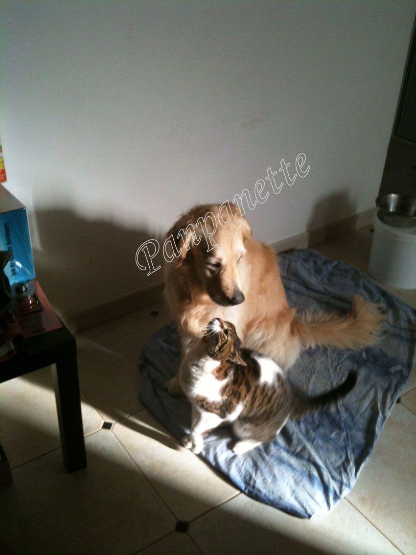 Couky et Haska