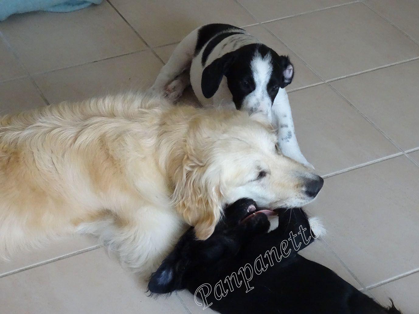 Gaspard et Loki