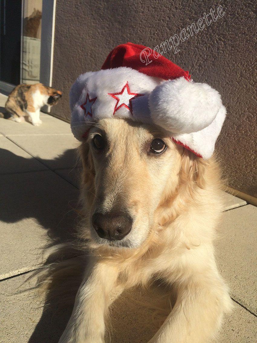 Haska, assistante du Père Noël
