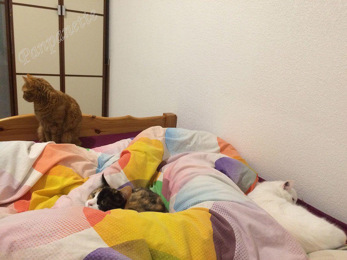 Les 3 chattes dans le lit en même temps ! ^^