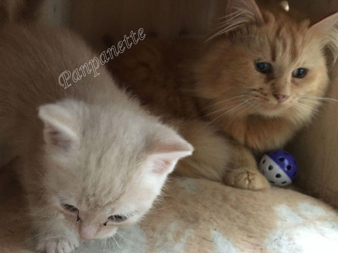 Nouvelles photos des chatons