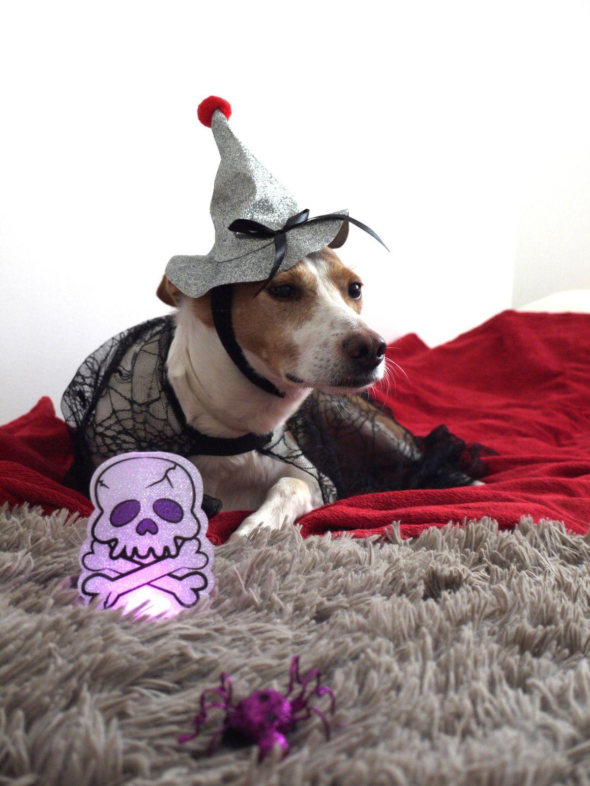 Happy happy halloween !!!