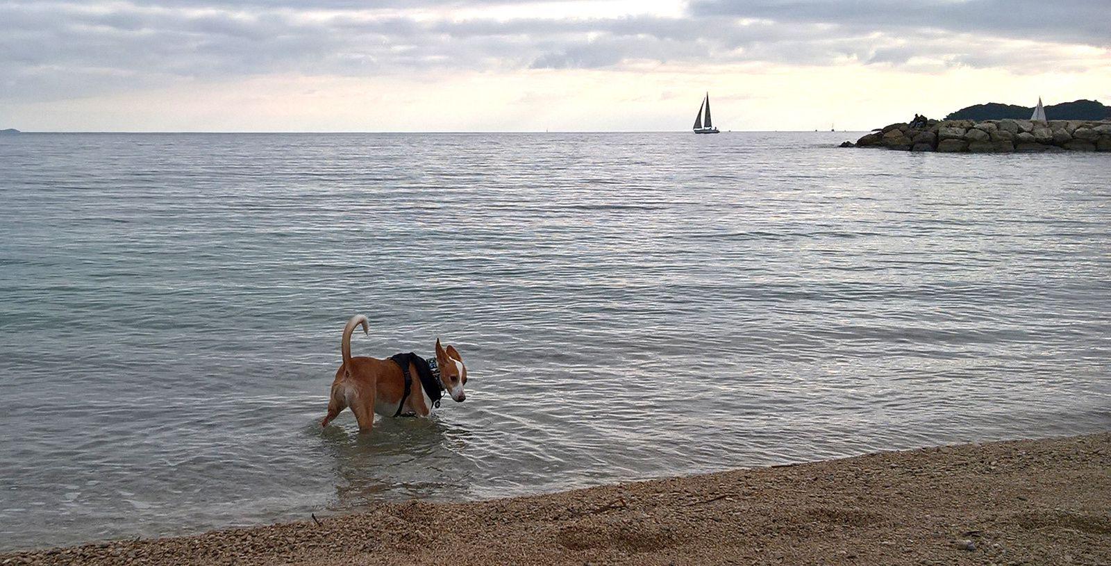 Libres à la plage !!!