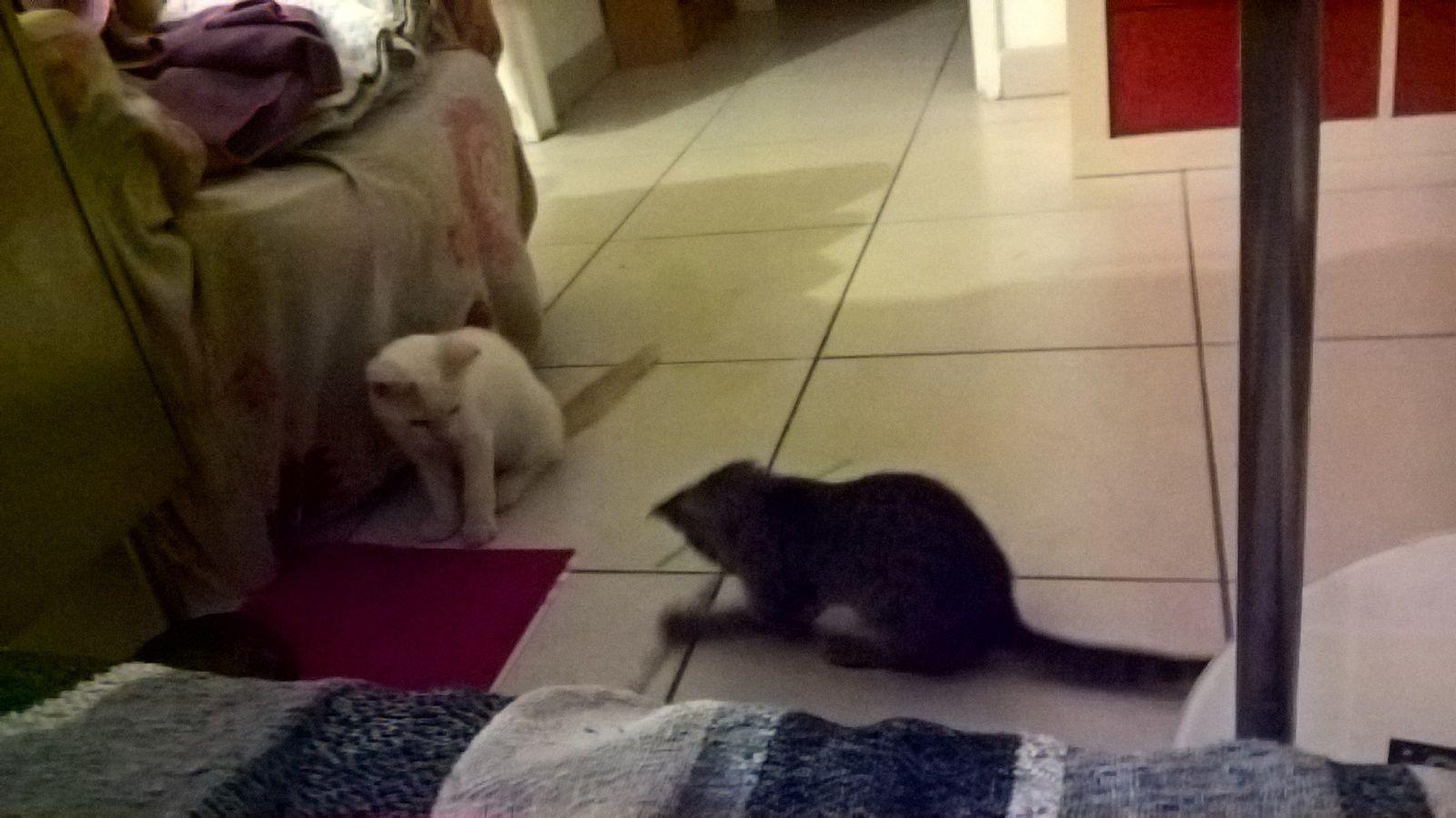 Cat sitter !!